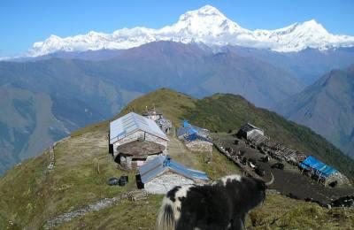 Départ le 3 Novembre  2018 pour le trek Dhaulagiri au pied des Annapurna sud