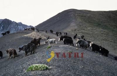 Réserve du Dorpatan et la route de la caravane du Dolpo