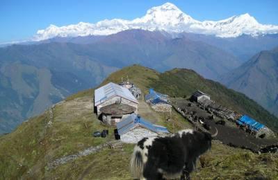 Serpenter Dhaulagiri au pied des Annapurna sud (4200m)